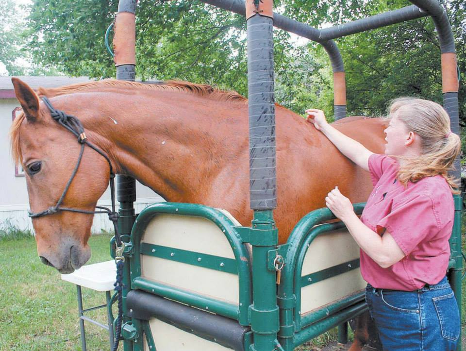 Dr Roster performing acupuncture on a horse