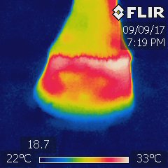 A thermography of a horse hoof