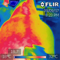 a thermography image of a horses back